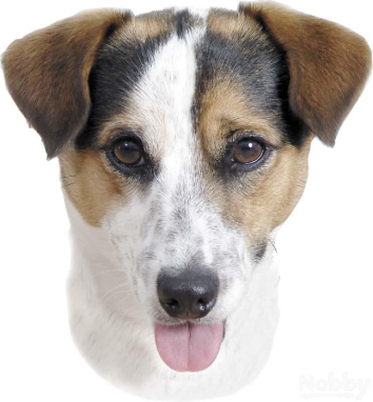 Nobby Aufkleber Jack Russel Terrier 120x150mm 2er Set